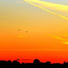 Sunset Silhouettes by Fara
