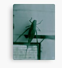 Bug Canvas Print