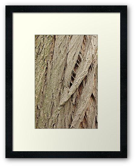 Cedar Bark by Thomas Murphy