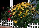 My Flower Garden at Midnight by Tori Snow