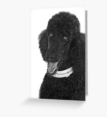 Not A Standard Poodle...I am A Special Poodle! Greeting Card