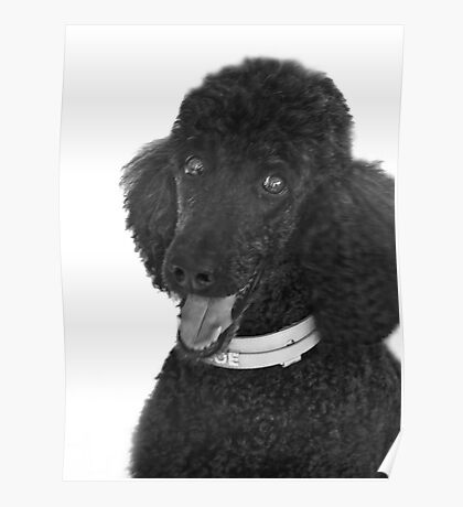 Not A Standard Poodle...I am A Special Poodle! Poster