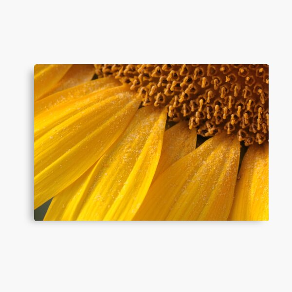 sunny pollen Canvas Print
