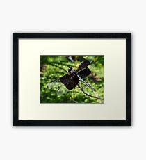 Libélula - Dragonfly Framed Print