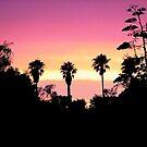 Backyard Sunset by Ellen Cotton