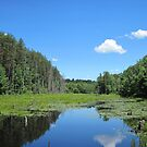 Massachusetts wetland by Ray Vaughan