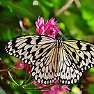 Open Wings by Eileen Brymer