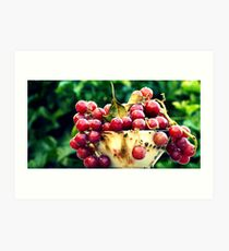 Sour  Grapes  Art Print