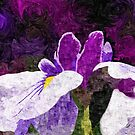 Painterly Purple Single Iris Flower in Early Summer by Beverly Claire Kaiya