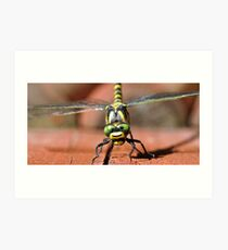Golden-ringed Dragonfly Art Print