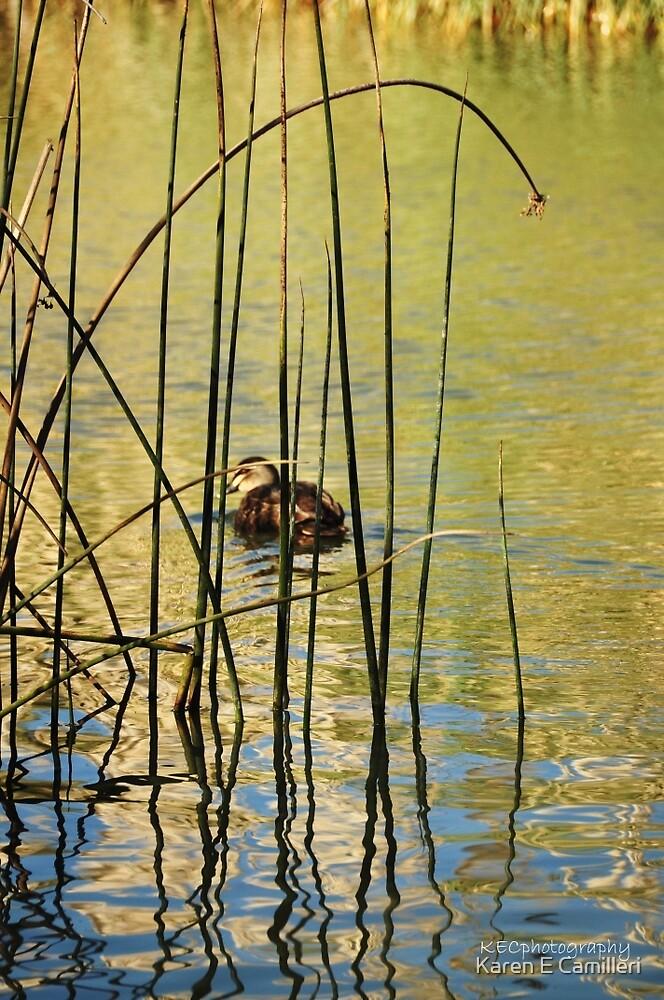 Winter Light on Duck Pond by Karen E Camilleri