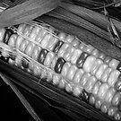 Indian Corn Black and White by Bo Insogna