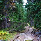 Rocky Mountain Forest Path by Bo Insogna