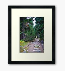 Rocky Mountain Forest Path Framed Print