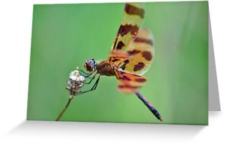 Spotted Dragonfly by savvysisstudio