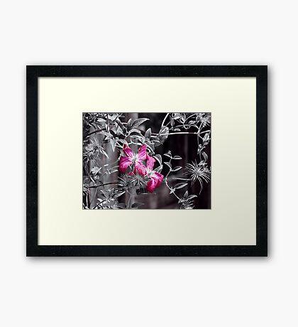 Beauty Abandoned~ Framed Print