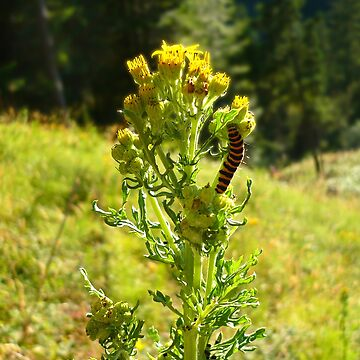 Caterpillars by GlockGirl40