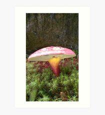 Mushroom on the South Lawn Art Print