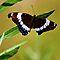 Dragonflies, Butterflies and Moths....oh my!