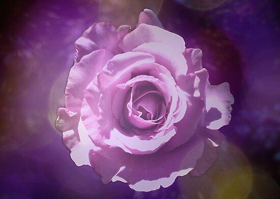 Rose Dream by Jess Meacham