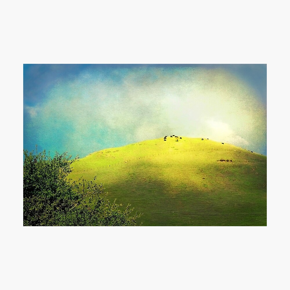 Cows on a Hill Photographic Print
