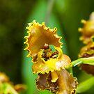 Golden  Yellow Orchid by JagiShahani