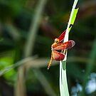 Dragonfly by JagiShahani