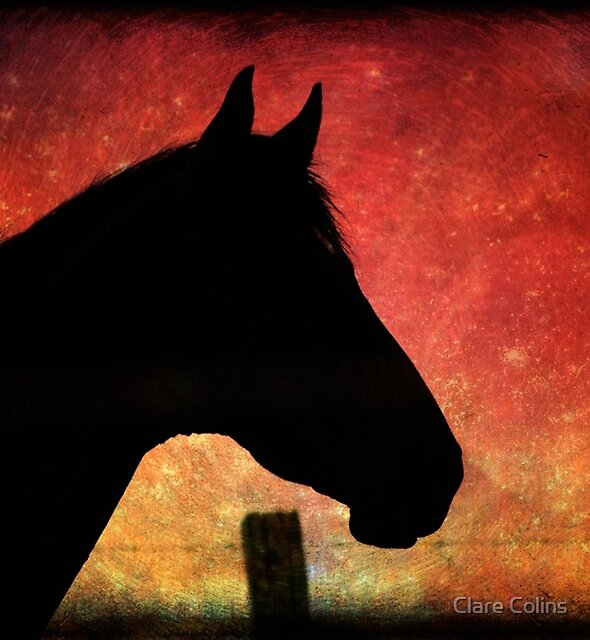 Horse Silhouette by Clare Colins