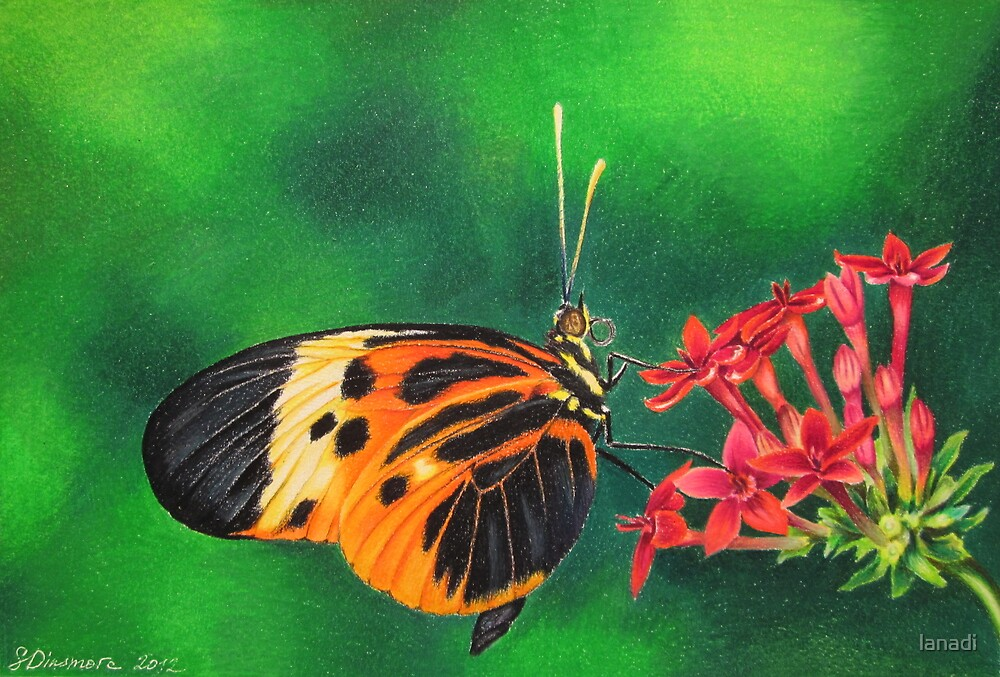 Orange Butterfly by lanadi