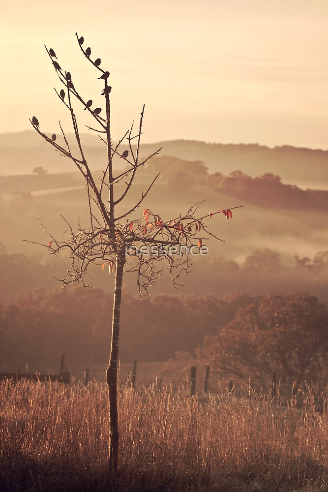 . autumnal bliss . by inessence