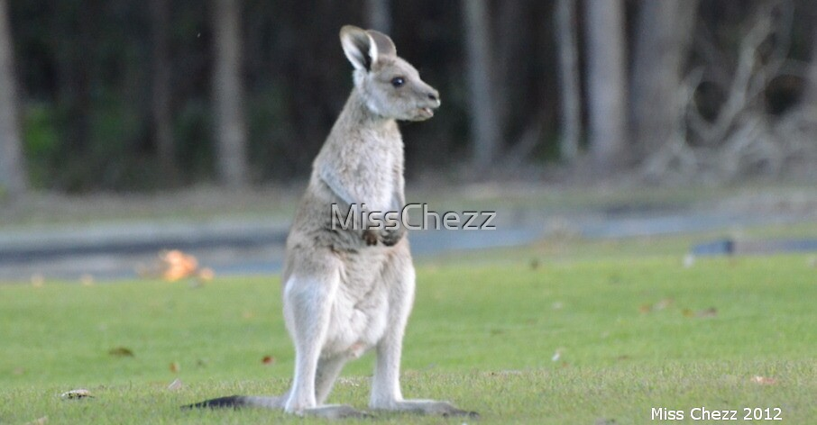 Baby Roo by MissChezz