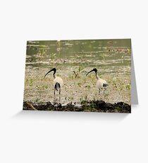 Ibis left Greeting Card