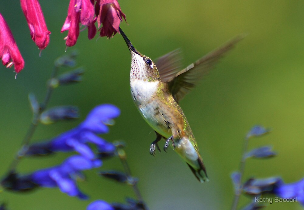 Hummingbird On A Wendy's Wish Flower by Kathy Baccari