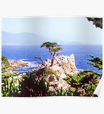 Cyprus Point - Monteray Peninsula California Poster