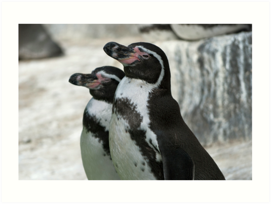 Humboldt Penguins by Vac1