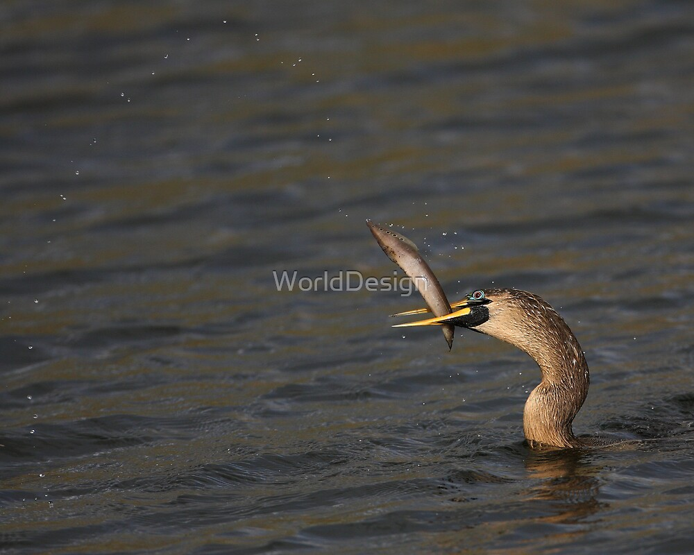Anhingas Love Fishing by WorldDesign