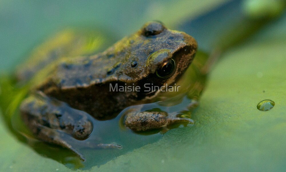 Frog! by Maisie Sinclair