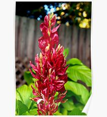 Red flower spike Poster