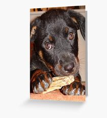 Rottweiler Puppy Chewing a Treat Greeting Card