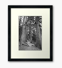 Rocky Mountain Forest Nature Path BW Framed Print