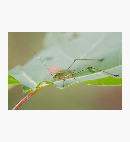 Grasshopper! Photographic Print