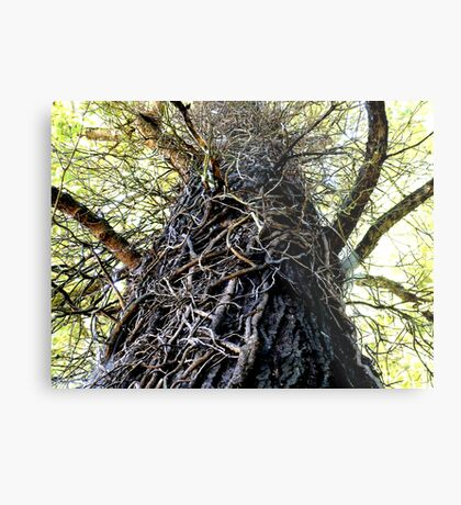 Twisted (in color) Metal Print