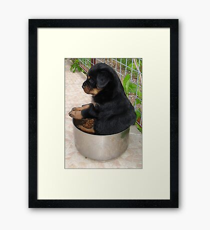 Rottweiler Puppy Sitting In A Bowl Of Food Framed Print
