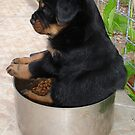 Rottweiler Puppy Sitting In A Bowl Of Food by taiche