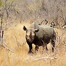 Buza in the bush by pennies4eles