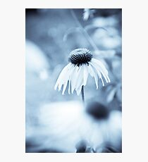 Blue fowers Photographic Print