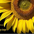 Here's to Sunny Days by Bev Pascoe