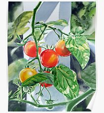 Cherry Tomatoes Poster