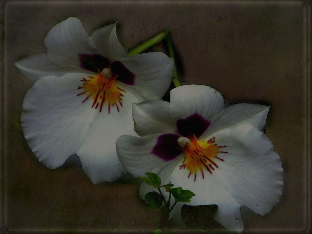 Delicate flowers by Judi Taylor