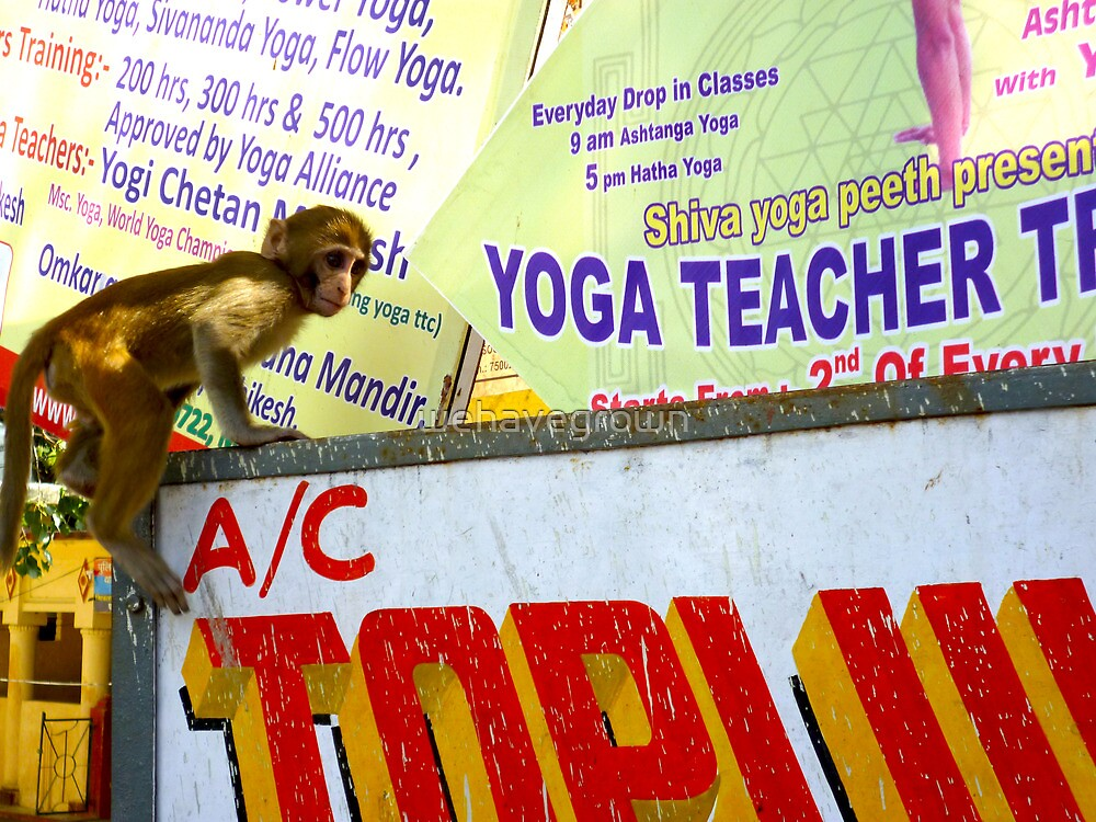 Yoga teacher in India-he's a monkey! No.2 by wehavegrown